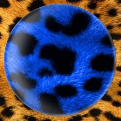 Léopard bleu
